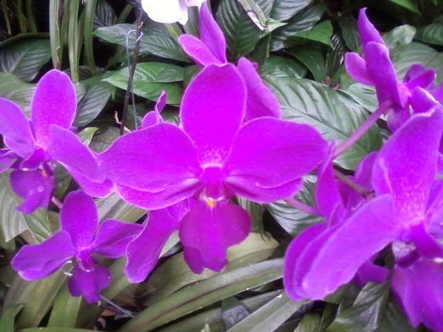orchid, longwood gardens 2013 by litebeing chronicles