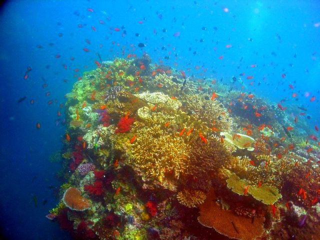 all these coral reef and underwater series are wikimedia public domain