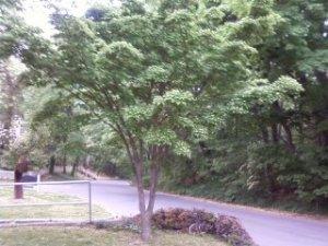 treeMay2015