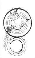 hummingbird circled