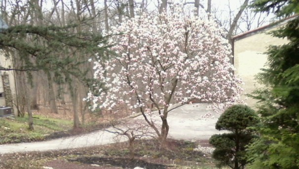 smalltree2